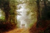 Two friends strolling down a magical forest path poster