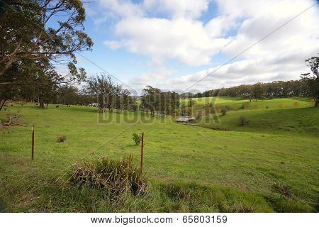 Undulating Hills And Cattle Grazing Southern Highlands Australia