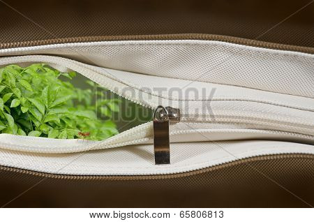 Nature In A Brown Bag