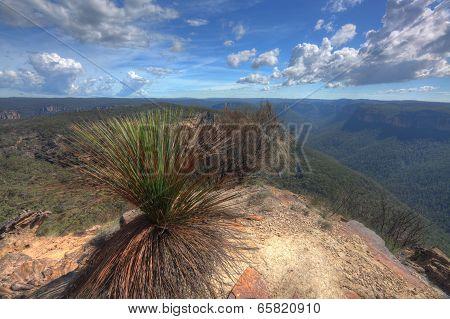Buramoko Ridge Blue Mountains National Park Australia