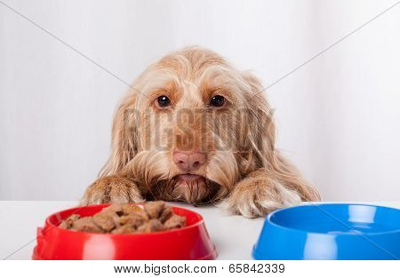 Dog Waiting Impatiently For Food