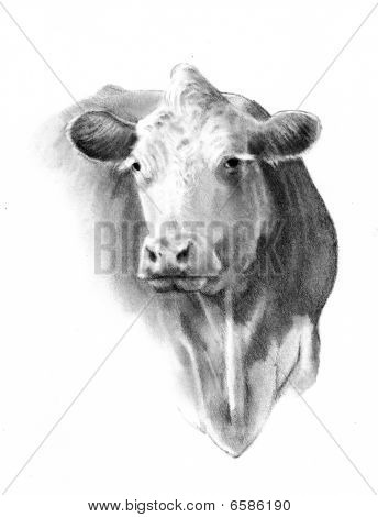 Pencil Drawing of A Cow Head