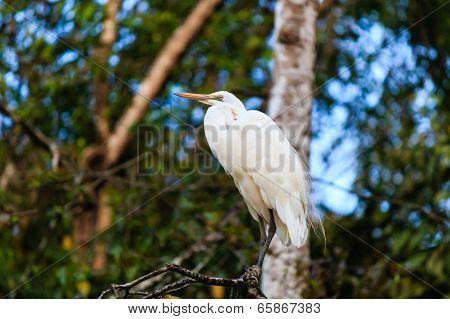 Egret Near A River In A Tropical Rain Forest