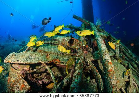 Colorful tropical fish underwater