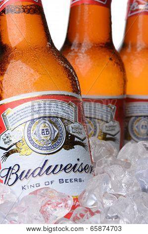 Closeup Of Budweiser Beer Bottles