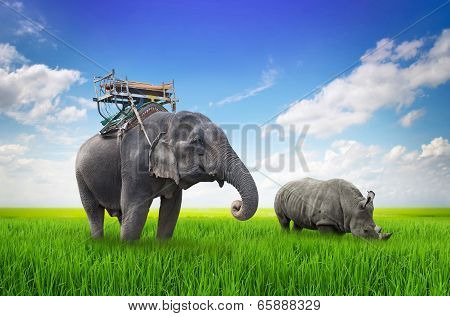 Elephants And Rhinos On Green Meadow