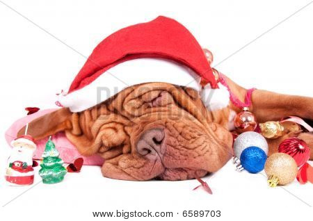 Santa, What's There In Your Bag For Me?/ Sleeping Dog With Funny