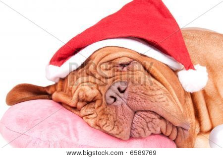 Dog Felt Asleep Before Christmas