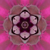Purple Concentric Carnation Flower Center Close-up. Mandala Kaleidoscopic design poster