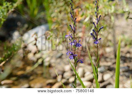 purple color wild flowers