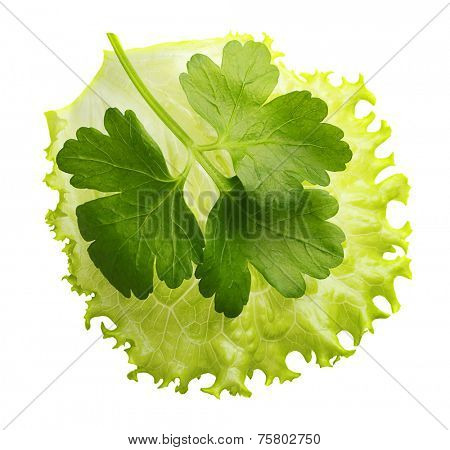 Lettuce leaf and parsley herb isolated on white background.