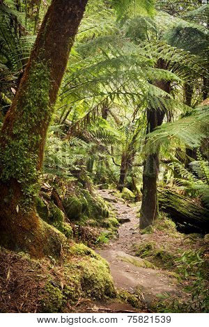 Otways National Park