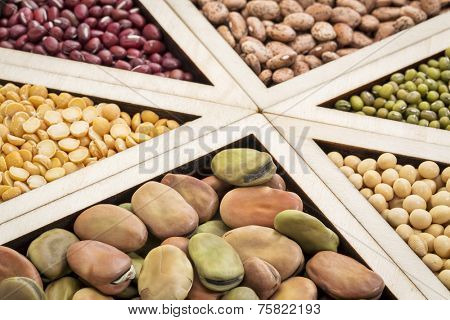 triangles - bean, lentil and pea abstract (fava, pinto, adzuki bean, green and French lentils, yellow pea, soybean), focus on fava beans