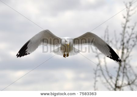 Bird With Wings Spread
