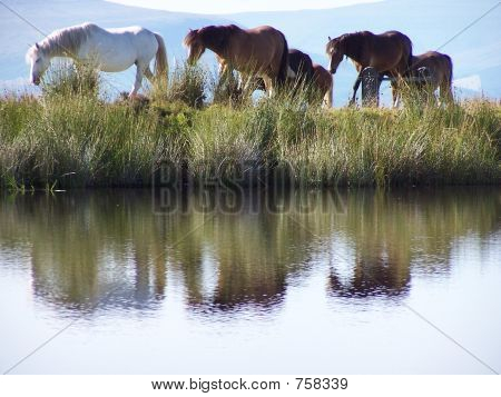horse reflections