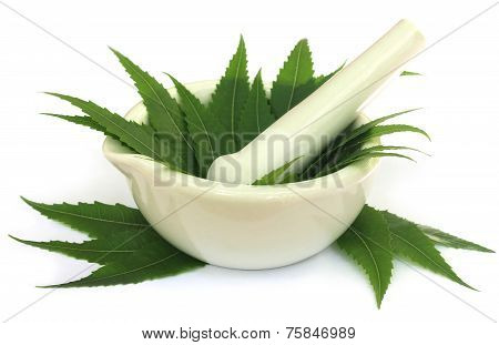Mortar And Pestle With Medicinal Neem Leaves