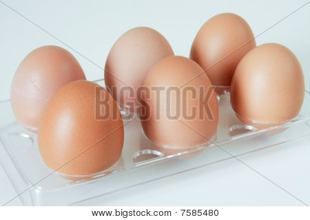Six poultry eggs in a rack.