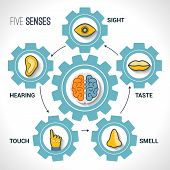 Five senses concept with human organs icons and brain in cogwheels vector illustration. poster
