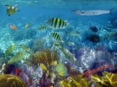 Caribbean reef tropical fishes underwater sea view poster