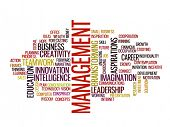 management strategy in 2015 concept word cloud poster