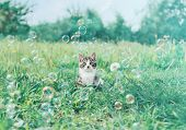 Cute little kitten sitting among soap bubbles on summer meadow. Image with vintage instagram filter poster