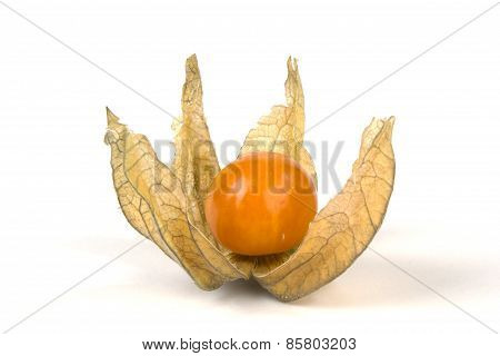 Fruit of physalis isolated on white background poster