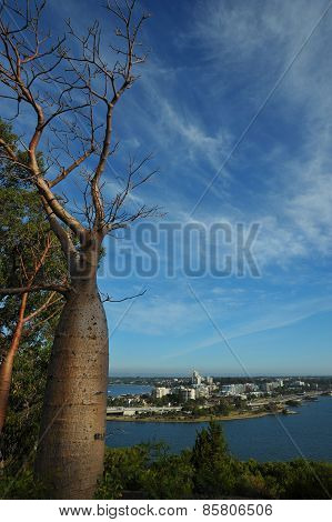 View On South Perth With Old  Boab From Kings Park