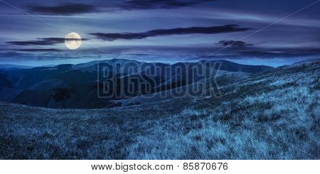 Wild Grass On Mountain Top At Night