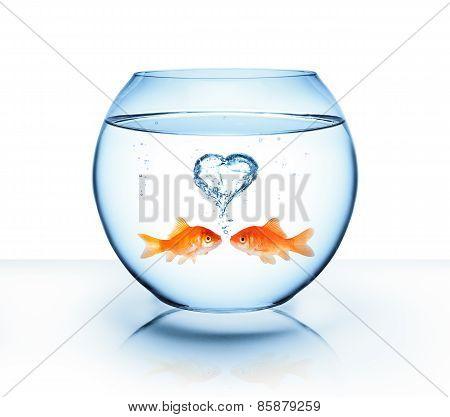 goldfish in love - romantic concept
