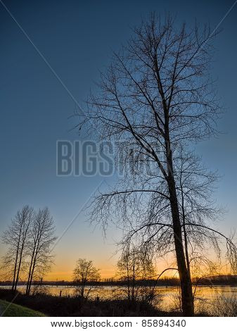 Leafless Tree Next To River At Sunset