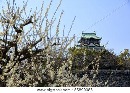 Osaka Castle and plum blossoms