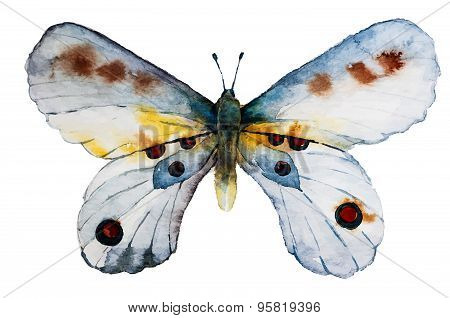 Watercolor Watercolor Butterfly