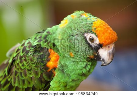 Green And Orange Parrot