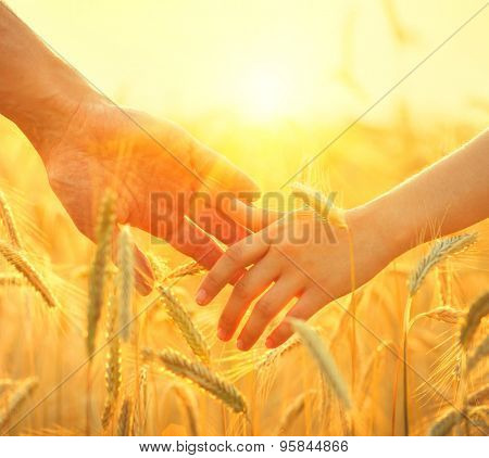 Father and daughter taking hands and walking on golden wheat field. Family walking together