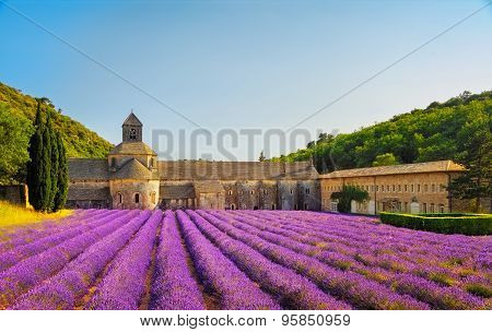 Abbey of Senanque and blooming rows lavender flowers on sunset. Gordes Luberon Vaucluse Provence France Europe. poster