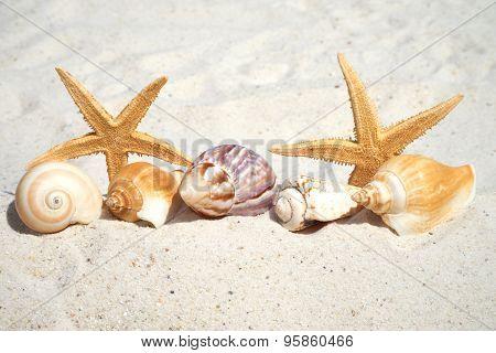 Seashells And Starfish On The Beach