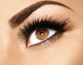 Brown Eye Makeup. Eyes Make-up. Beautiful Eyes Make up detail, perfect beauty eyebrows poster