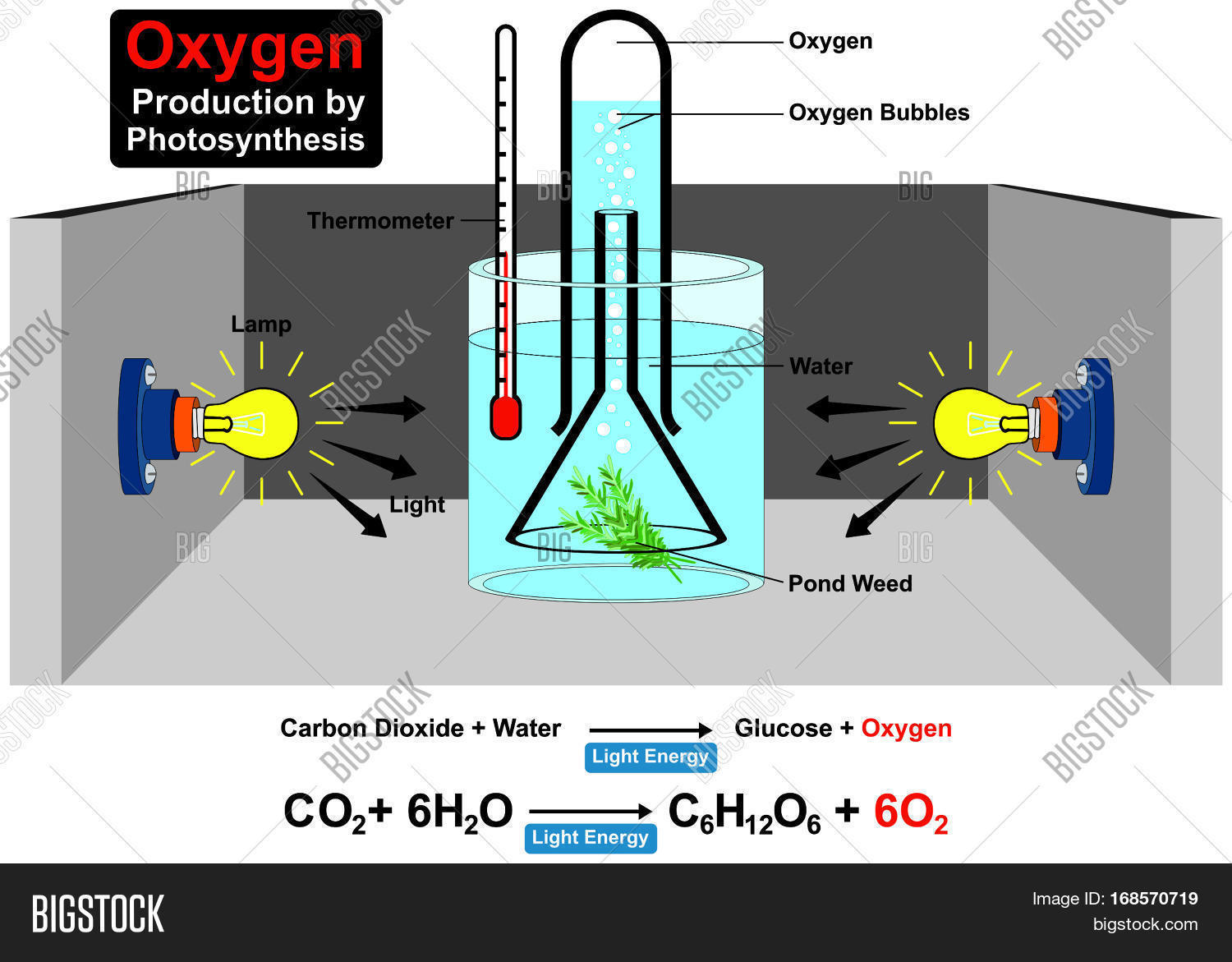 Oxygen production by image photo free trial bigstock oxygen production by photosynthesis process experiment with chemical formula wit parts lamp water plant pond weed ccuart Choice Image