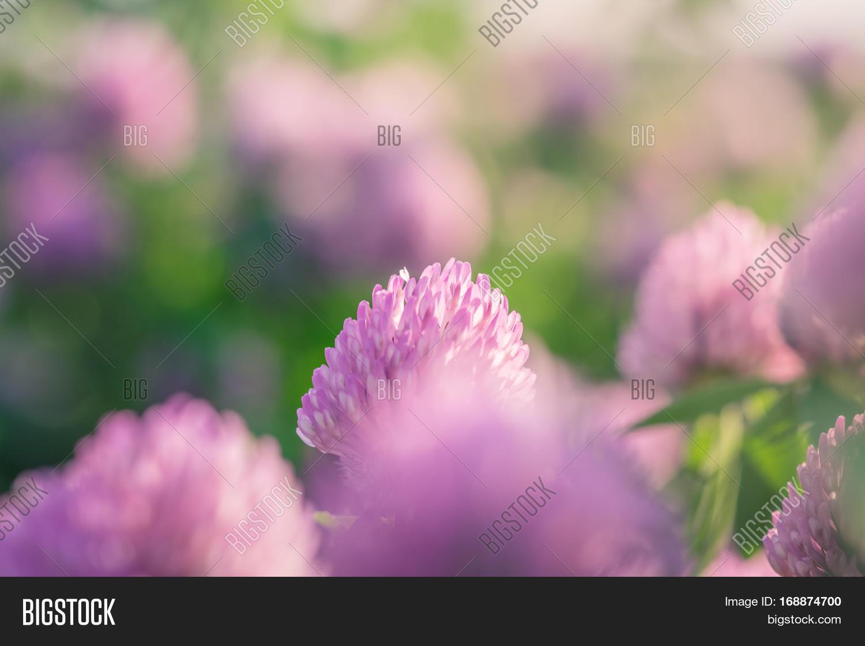 Wild Meadow Pink Image Photo Free Trial Bigstock