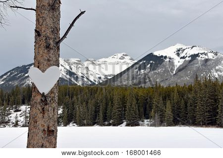 Picture of a heart of snow in a tree,taken at Johnson lake in Banff national Park, Alberta, Canada.