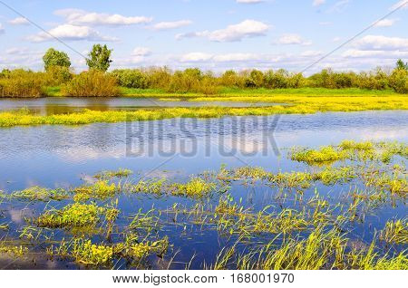 Spring landscape - river overgrown with spring yellow flowers in spring sunny day. Spring nature view of blue river. Spring nature in sunny day. Landscape view of spring nature