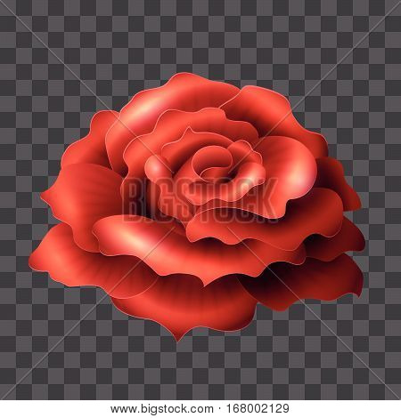 Blooming Red Rose. Realistic glossy vector flower suitable for any color backgrounds. Love symbol. Closeup element for invitations wedding and celebration designs