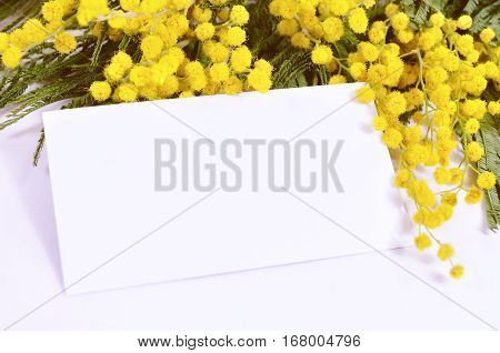 Spring background with mimosa - white card in the mimosa spring flowers. Spring still life with spring flowers of mimosa. Mimosa flowers with blank card - spring background