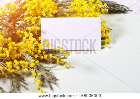 8 March postcard - white card and mimosa flowers. 8 March background with blank card for 8 March message