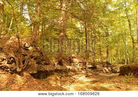 Dried up Creek bed covered with fallen leaves in autumn