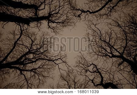 The branches of the tree. Gloomy background. Hopelessness. Despair.