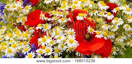 Wild flowers bouquet with poppies, daisies and cornflowers. Colorful wildflowers background.