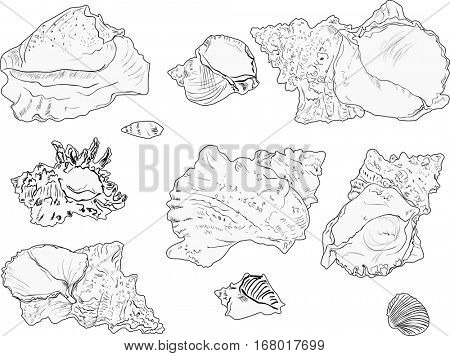 illustration with ten light shellfishes sketches isolated on white background