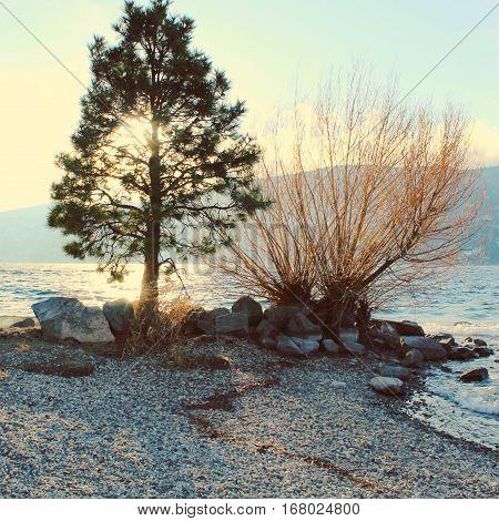 Sunlight Through Tree At The Lake