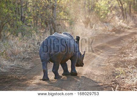 rhino at tanzania national parks, Tanzania, africa